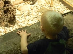 looking at snakes